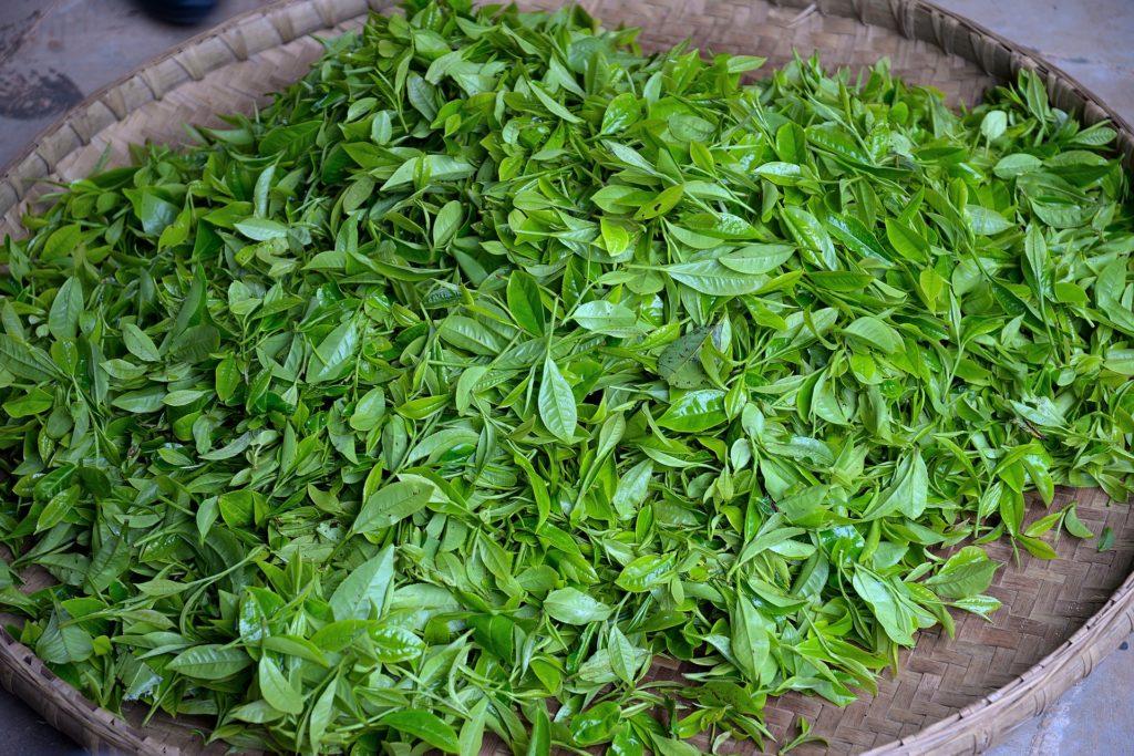 Lístky zeleného čaju